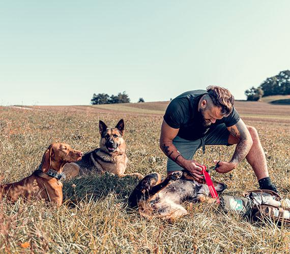 RG Dogs | Erste Hilfe